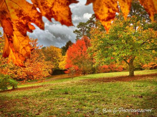 Glorious colours of Autumn
