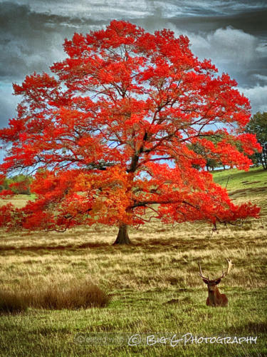 Autumn Colours during rutting season